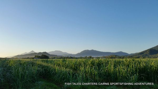 Sugar Cane Fields near Trinity Inlet, Cairns