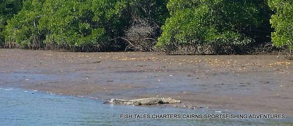 Nice to see you Mr Saltwater Crocodile!