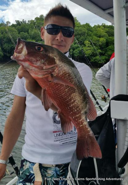 Estuary fishing charter from Cairns, Queensland for Mangrove jacks